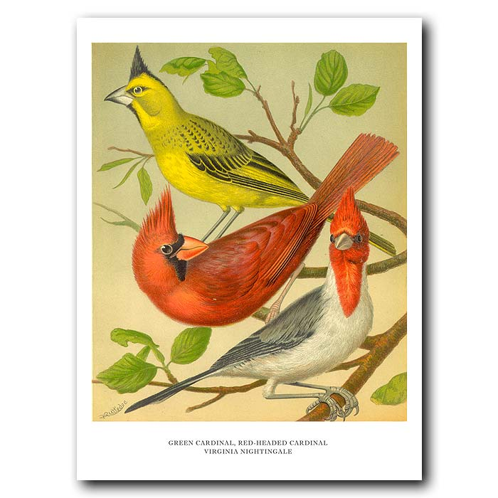 Fine art print for sale. Green & Red Cardinals
