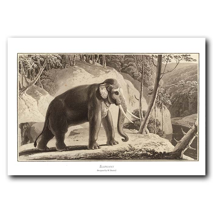 Fine art print for sale. Elephant On A River Bank