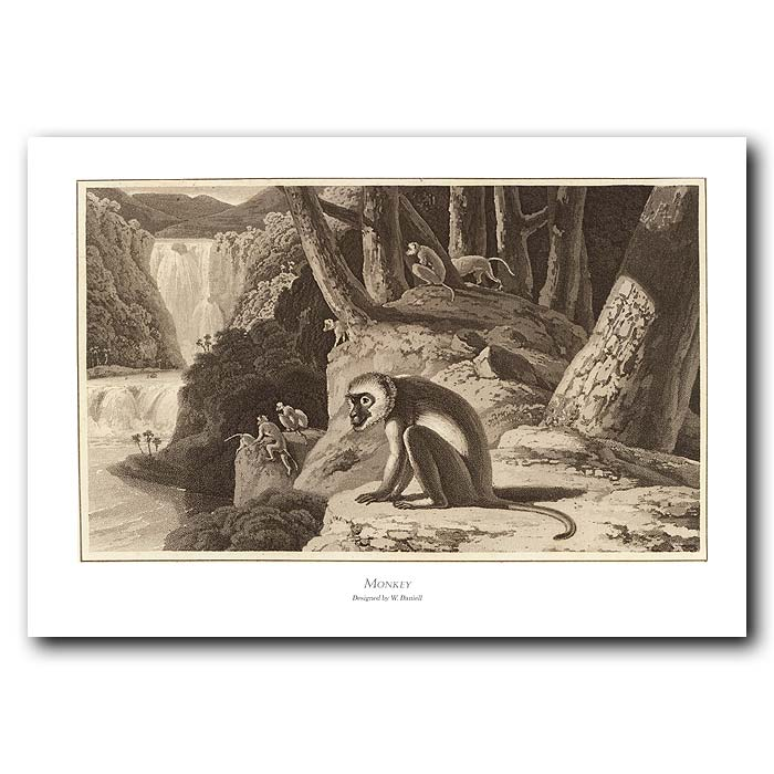 Fine art print for sale. Monkey And Waterfall