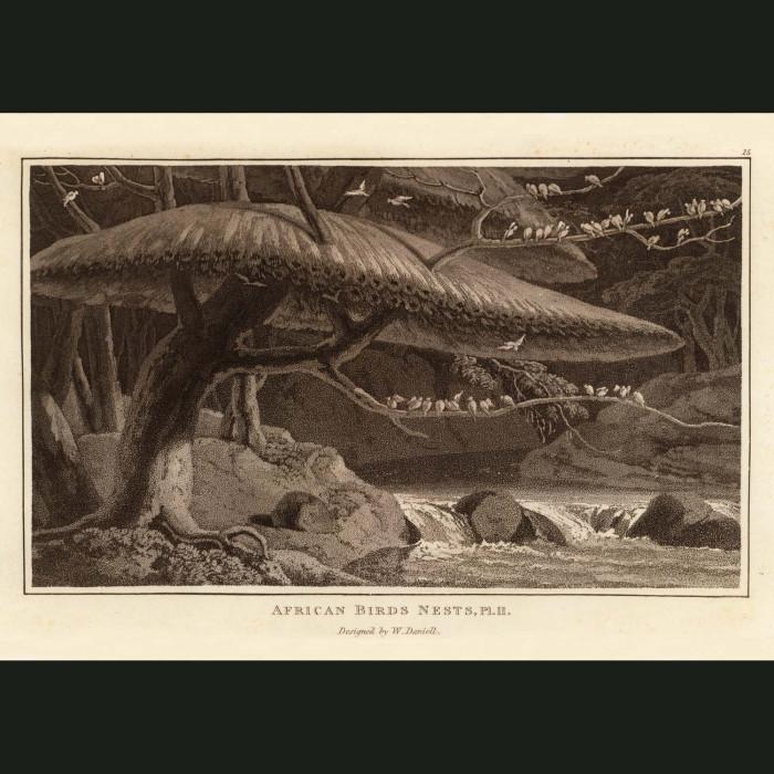 Fine art print for sale. African Bird Nests