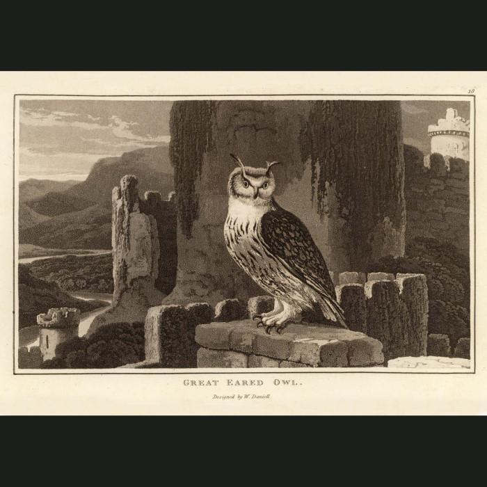 Fine art print for sale. Great Eared Owl On Castle Ruins